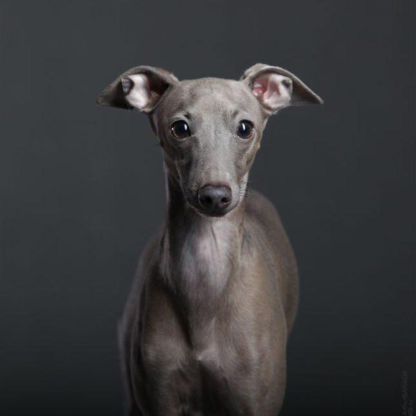 Фотосъемка животных в студии. Фотостудия Дизайн-сервис ТРУ